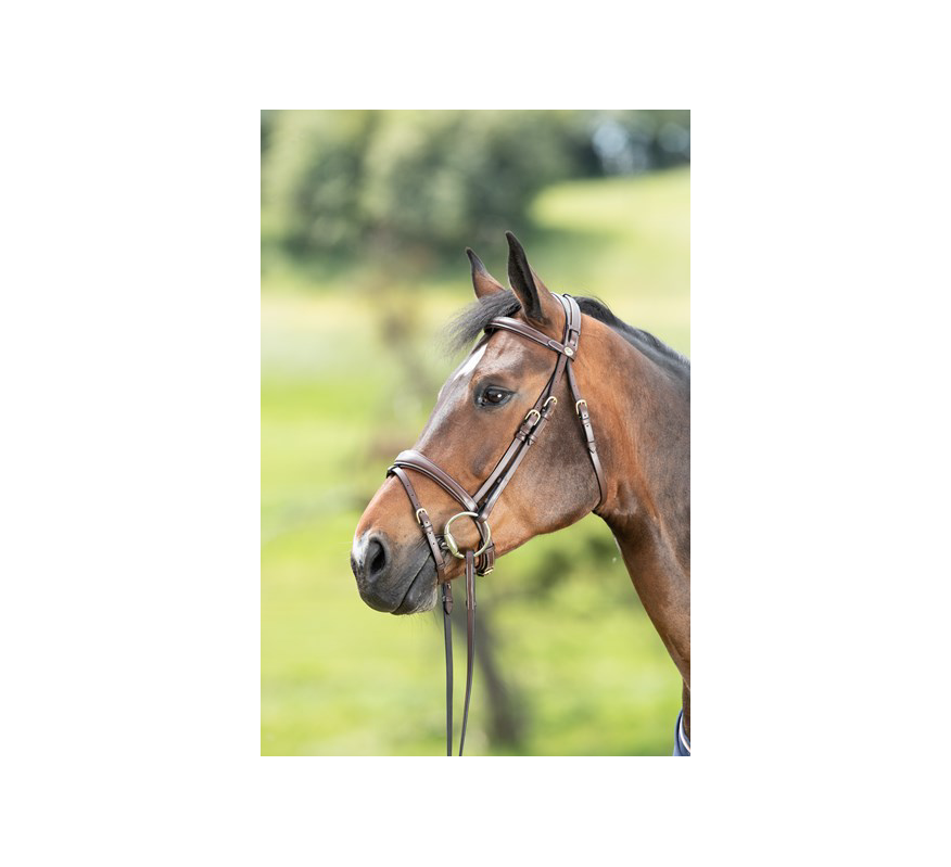 HFI Bridle Technical