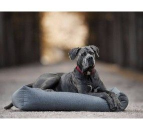 KENTUCKY Dog Bed Soft Sleep S Gris 60x40cm