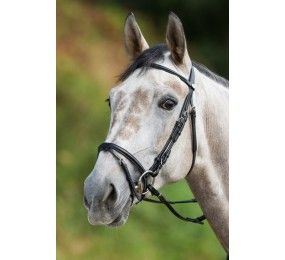 HFI Bridle Regular