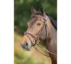 HFI Bridle Anatomic