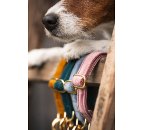 KENTUCKY Dog Collar Velvet