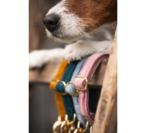 KENTUCKY Hundehalsband Velvet