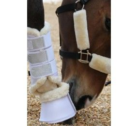 HARCOUR Cosmo Dressage Gaiters
