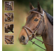 HFI Bridle Functional Brun